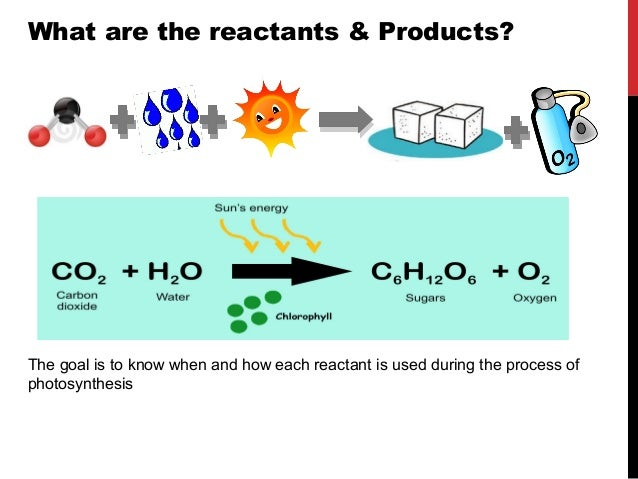 photosynthesis reactants know