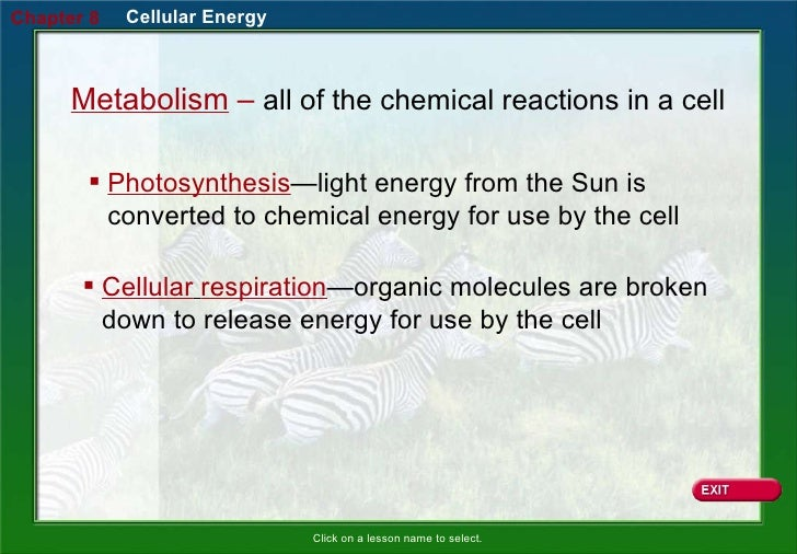 introduction to cellular respiration Some organisms, such as plants, can trap the energy in sunlight through  photosynthesis (see chapter 5) and store it in the chemical bonds of  carbohydrate.