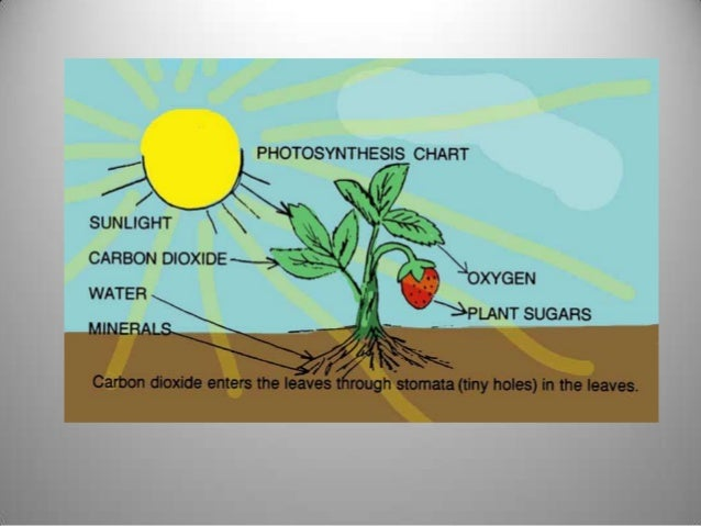 phtosynthesis Photosynthesis photosynthesis is the process by which plants, some bacteria and some protistans use the energy from sunlight to produce.