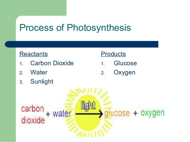 photosynthesis respiration reactants process chemical mitochondria plants water chloroplast