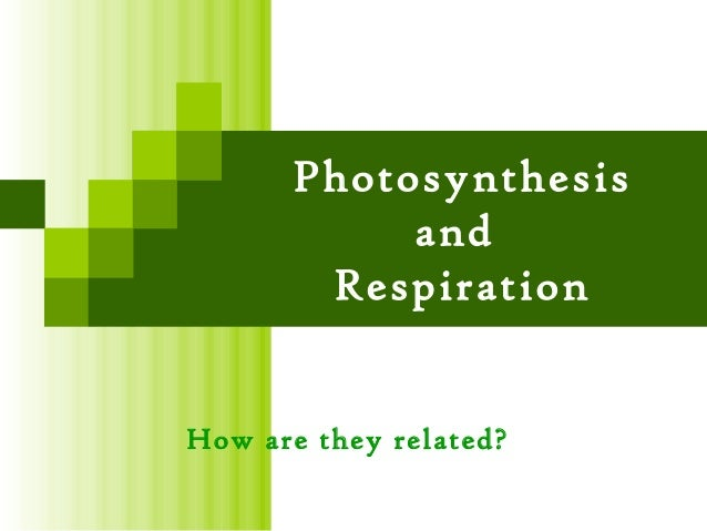 Photosynthesis           and       RespirationHow are they related?