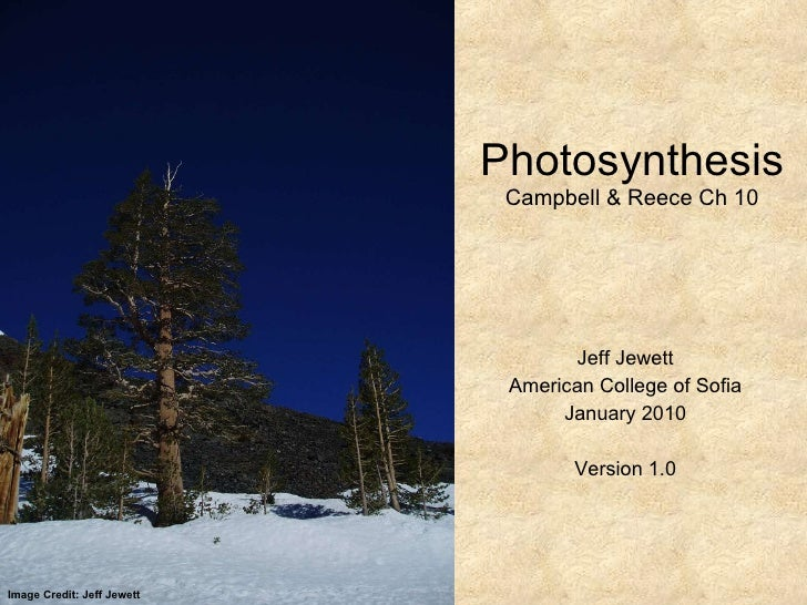 Photosynthesis Campbell & Reece Ch 10 Jeff Jewett American College of Sofia January 2010 Version 1.0 Image Credit: Jeff Je...