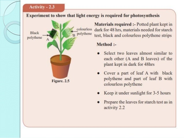  KOH present in bag D absorbs CO2  Therefore leaf D does not do photosynthesis as it does not receive CO2  Therefore th...