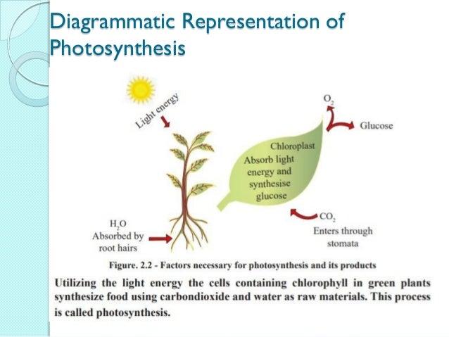Diagrammatic Representation of Photosynthesis