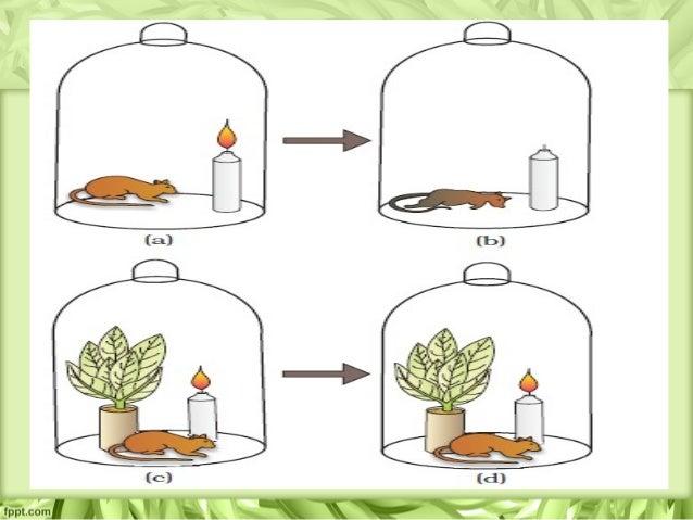 Photosynthesis Jan Ingenhousz >> Photosynthesis in higher plants