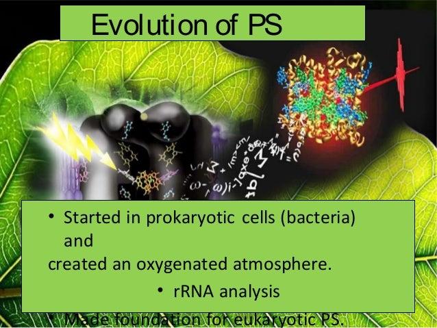 Photosynthesis intro