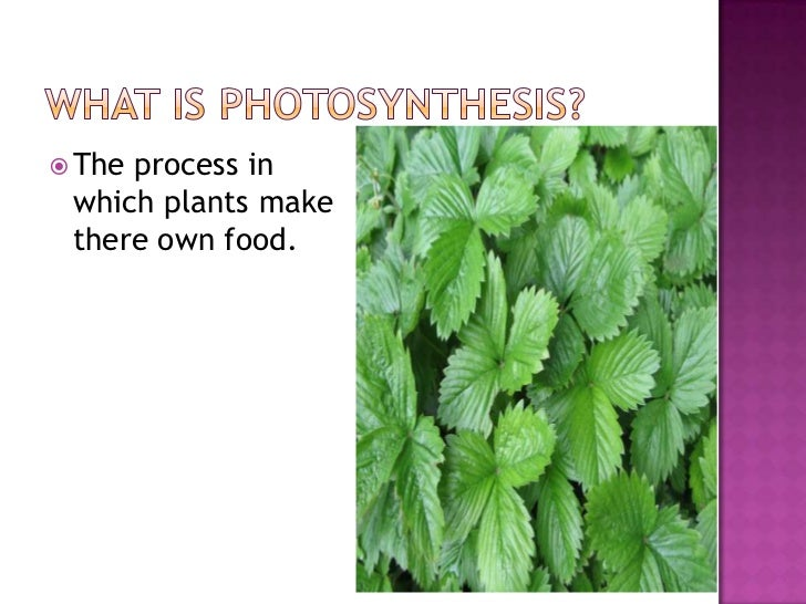 photosythesis lesson Photosynthesis is a process of taking inorganic material to make new organic matter it is an important process that allows of us humans to survive.