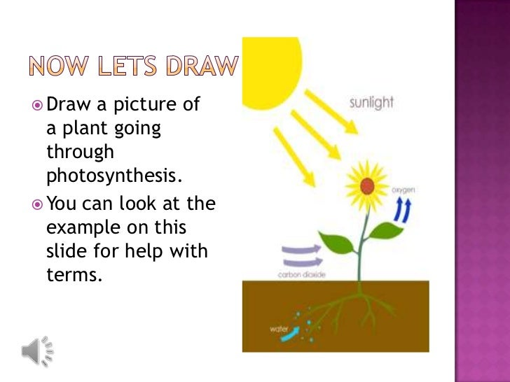 Translations Into Italian: Photosynthesis Lesson