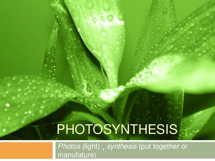 PHOTOSYNTHESISPhotos (light) + synthesis (put together ormanufature)