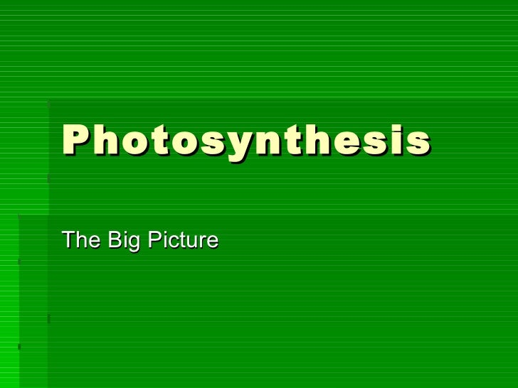 Photosynthesis The Big Picture