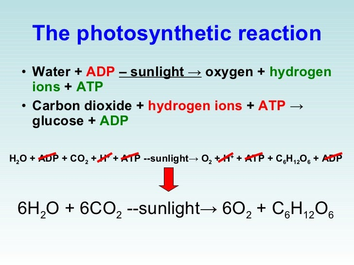 structures of photosynthesis Photosynthesis is a process used by plants in which energy from sunlight is used   plants cells contain a number of structures that are involved in the process of.