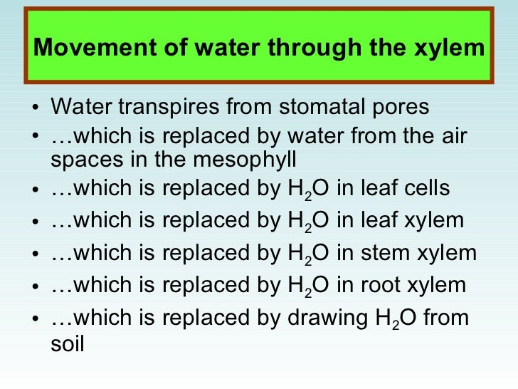 structures of photosynthesis Photosynthesis means  cell structure 3 the first step in photosynthesis is the absorption of light energy synthesis of water production of oxygen formation of.