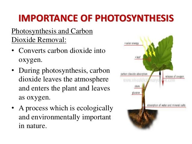 questions about photosythesis Quiz over photosynthesis that focuses on how oxygen is split, providing and electron that eventually results in the formation of atp this is an advanced quiz.