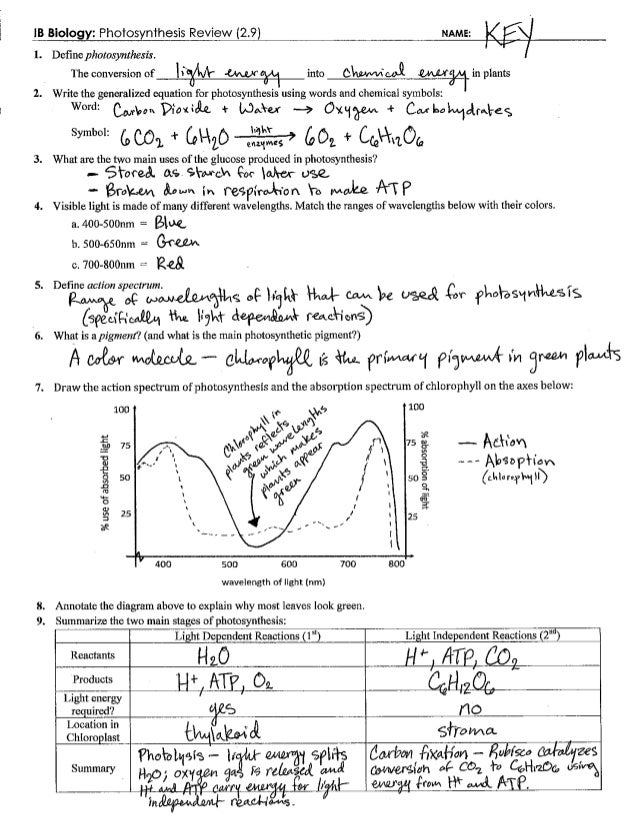 Photosynthesis Review Key 29