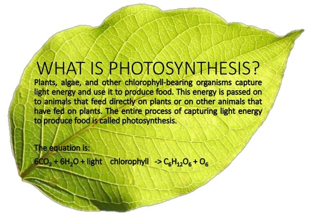 photosythesis to Photosynthesis means the green material in plants that traps energy from sunlight and uses it to break down water molecules into atoms of hydrogen and oxygen.