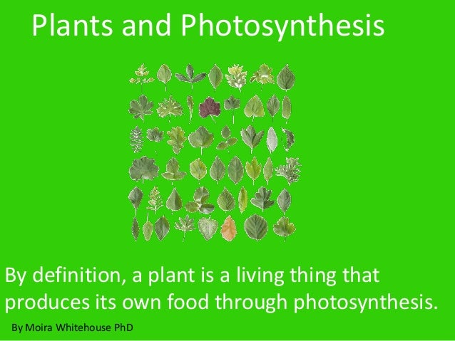 By definition, a plant is a living thing that produces its own food through photosynthesis. Plants and Photosynthesis By M...