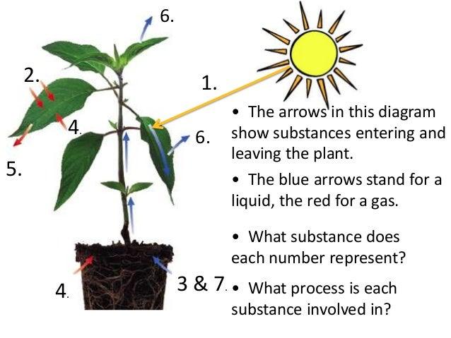 Photosynthesis teach 23 ccuart Images