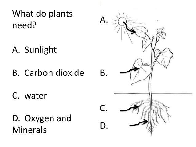 Photosynthesis (teach)