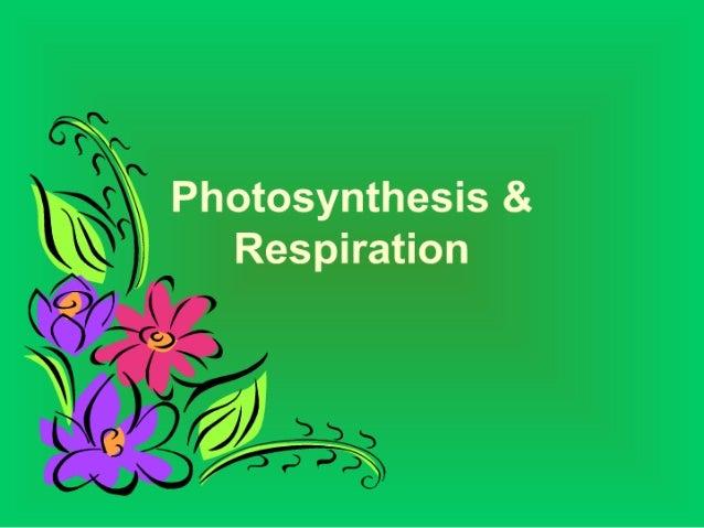 Photosysthesis
