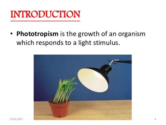 Phototropism Ppt