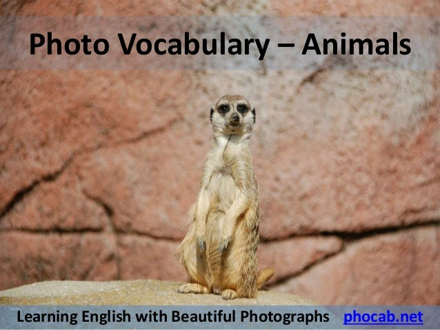 Italian English Animsld: Photo Vocabulary