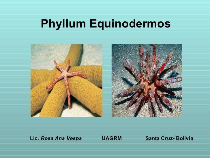 Phyllum Equinodermos Lic.  Rosa Ana Vespa   UAGRM   Santa Cruz- Bolivia