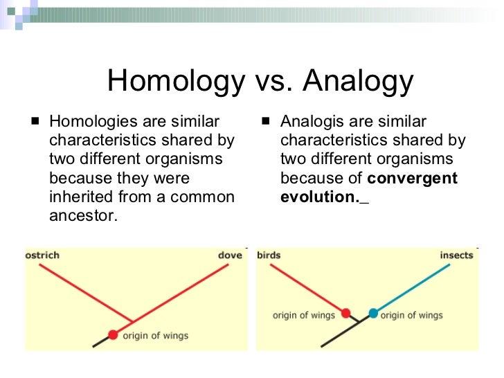 Phylogeny Amp Classification