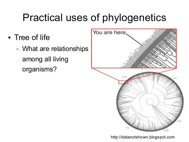 Phylolecture