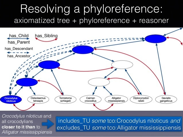 Resolving a phyloreference: axiomatized tree + phyloreference + reasoner Crocodylus niloticus and all crocodylians close...
