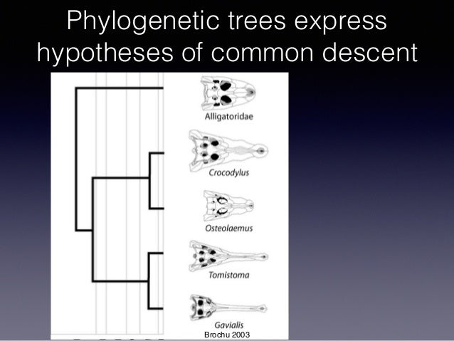 Phylogenetic trees express hypotheses of common descent Brochu 2003