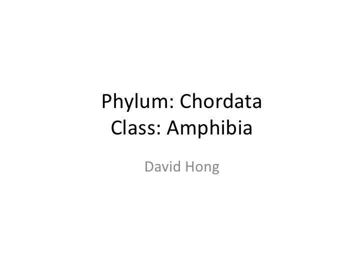 Phylum: Chordata  Class: Amphibia     David Hong