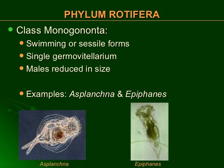 What are some examples of rotifers? + example.