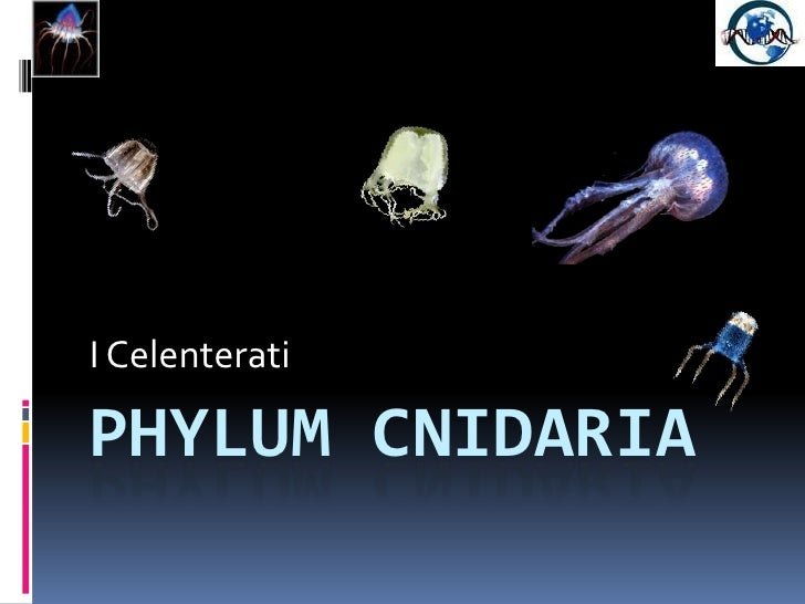 Phylum Cnidaria<br />I Celenterati<br />