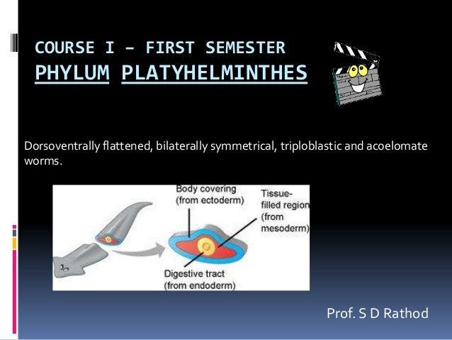 COURSE I – FIRST SEMESTER  PHYLUM PLATYHELMINTHESDorsoventrally flattened, bilaterally symmetrical, triploblastic and acoe...