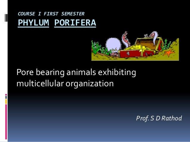 COURSE I FIRST SEMESTERPHYLUM PORIFERAPore bearing animals exhibitingmulticellular organization                           ...