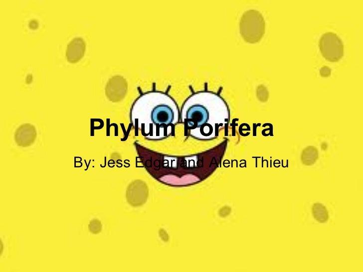 Phylum PoriferaBy: Jess Edgar and Alena Thieu