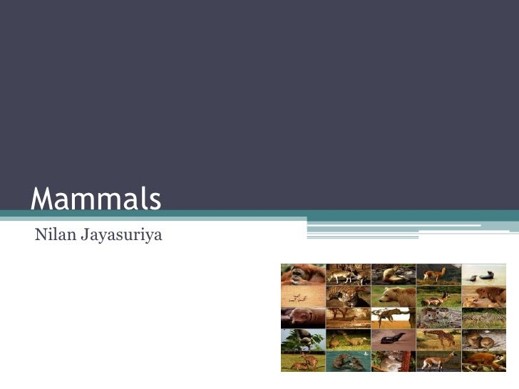 Mammals Nilan Jayasuriya