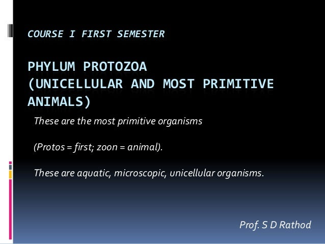 COURSE I FIRST SEMESTERPHYLUM PROTOZOA(UNICELLULAR AND MOST PRIMITIVEANIMALS)These are the most primitive organisms(Protos...