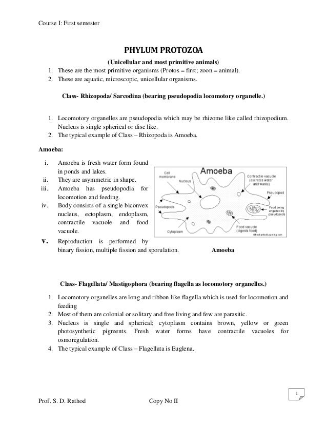 Course I: First semester                                    PHYLUM PROTOZOA                             (Unicellular and m...