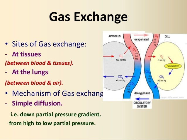 gaseous exchange and transport Gaseous exchange takes place in the alveoli and the blood it refers to the  movement of the oxygen and carbon dioxide in and out of the body it takes place  in.