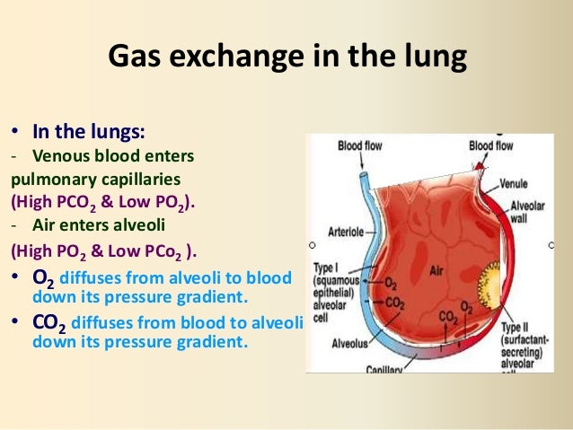 Respiratory 2 Gas Transport Physiology