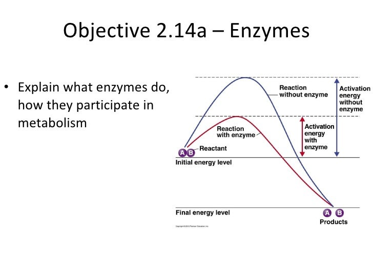 Objective 2.14a – Enzymes <ul><li>Explain what enzymes do, how they participate in metabolism </li></ul>