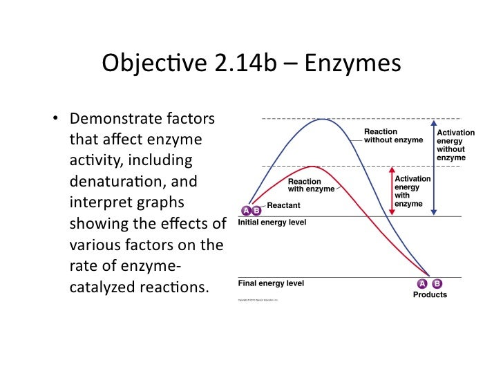Objec&ve2.14b–Enzymes • Demonstratefactors    thataffectenzyme    ac&vity,including    denatura&on,and    int...