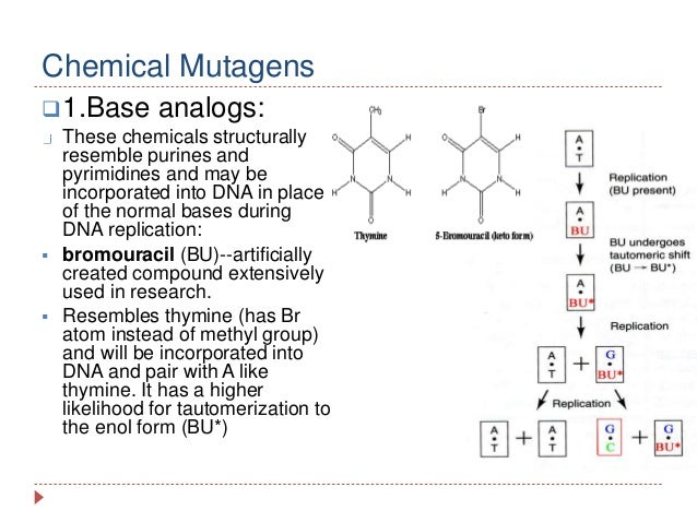 physical and chemical mutagens