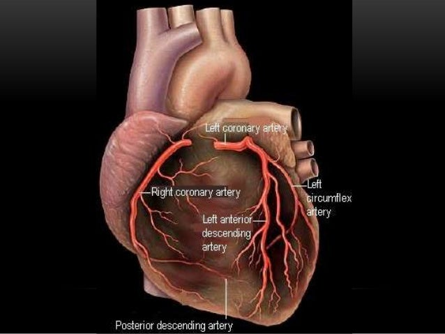 Cardiac Muscle Your heart is made of cardiac muscle. This type of muscle only exists in your heart. Unlike other types of ...