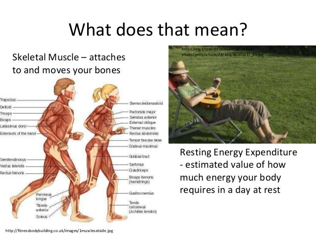 physical inactivity: summary of the evidence, Muscles