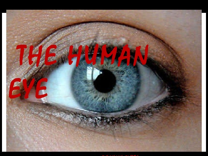THE HUMAN EYE DIVYANK GUPTA   Xth – E   16 .