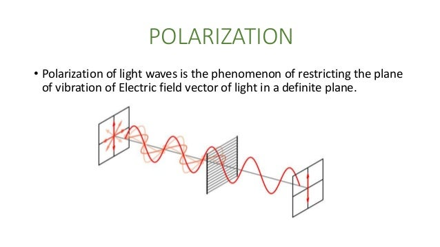 Examples Of Polarized Light In Nature
