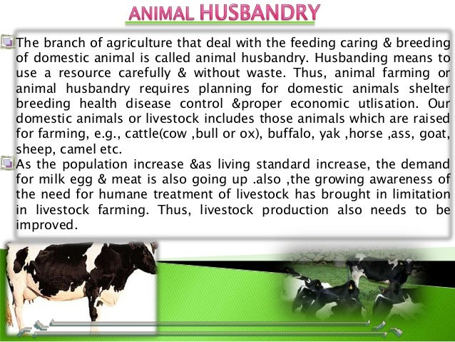 animal husbandry animal husbandry 1 topic 2