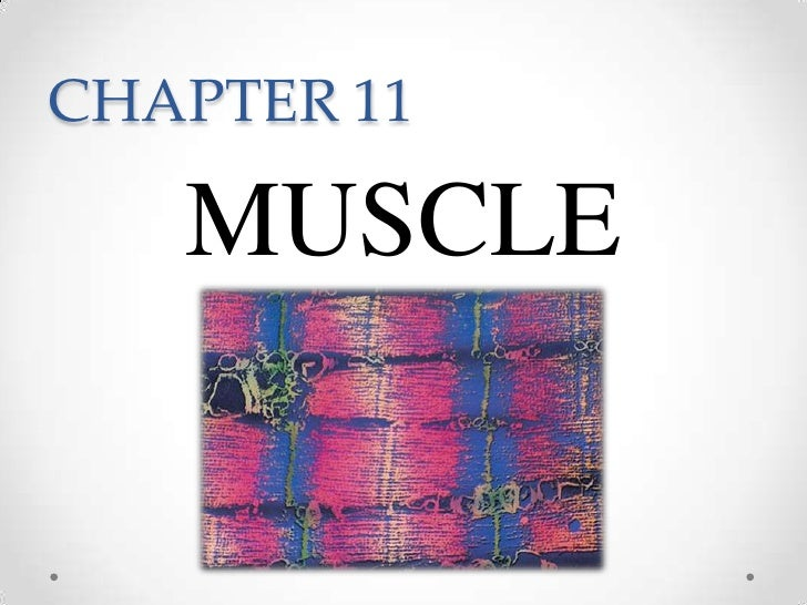 CHAPTER 11<br />MUSCLE<br />